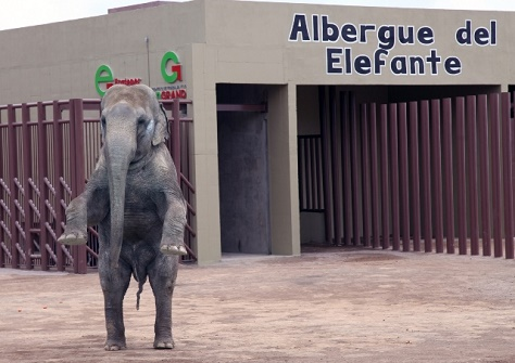 elefante ecatepec