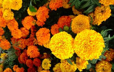 florES MUERTOS