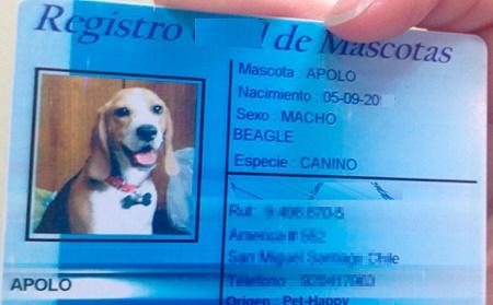 registro de mascotas