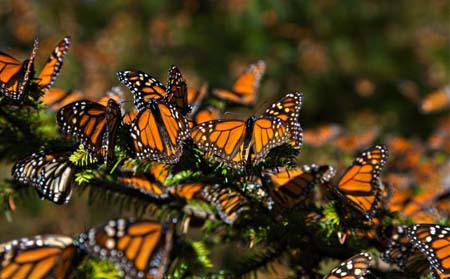 monarca-edomex