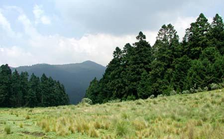 bosque-edomex